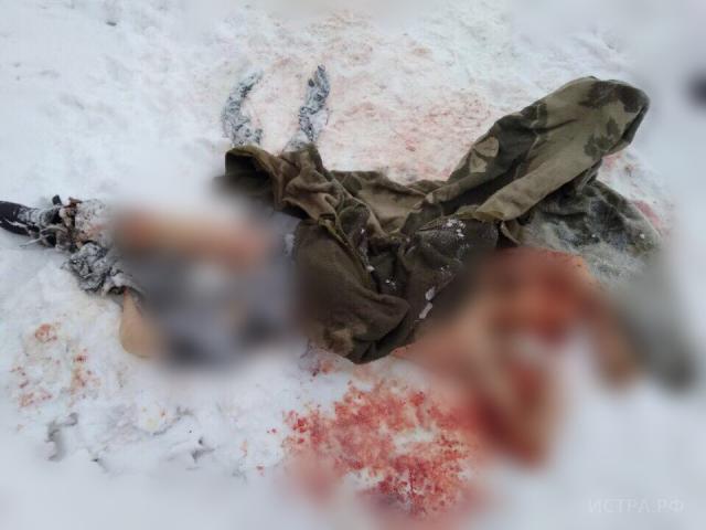 СледкомРФ: ВПодмосковье бродячие собаки загрызли молодого человека  ипокусали женщину
